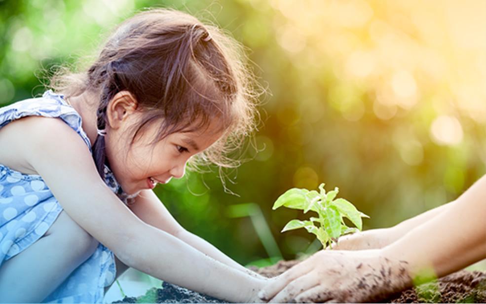 content-tree-planting-2