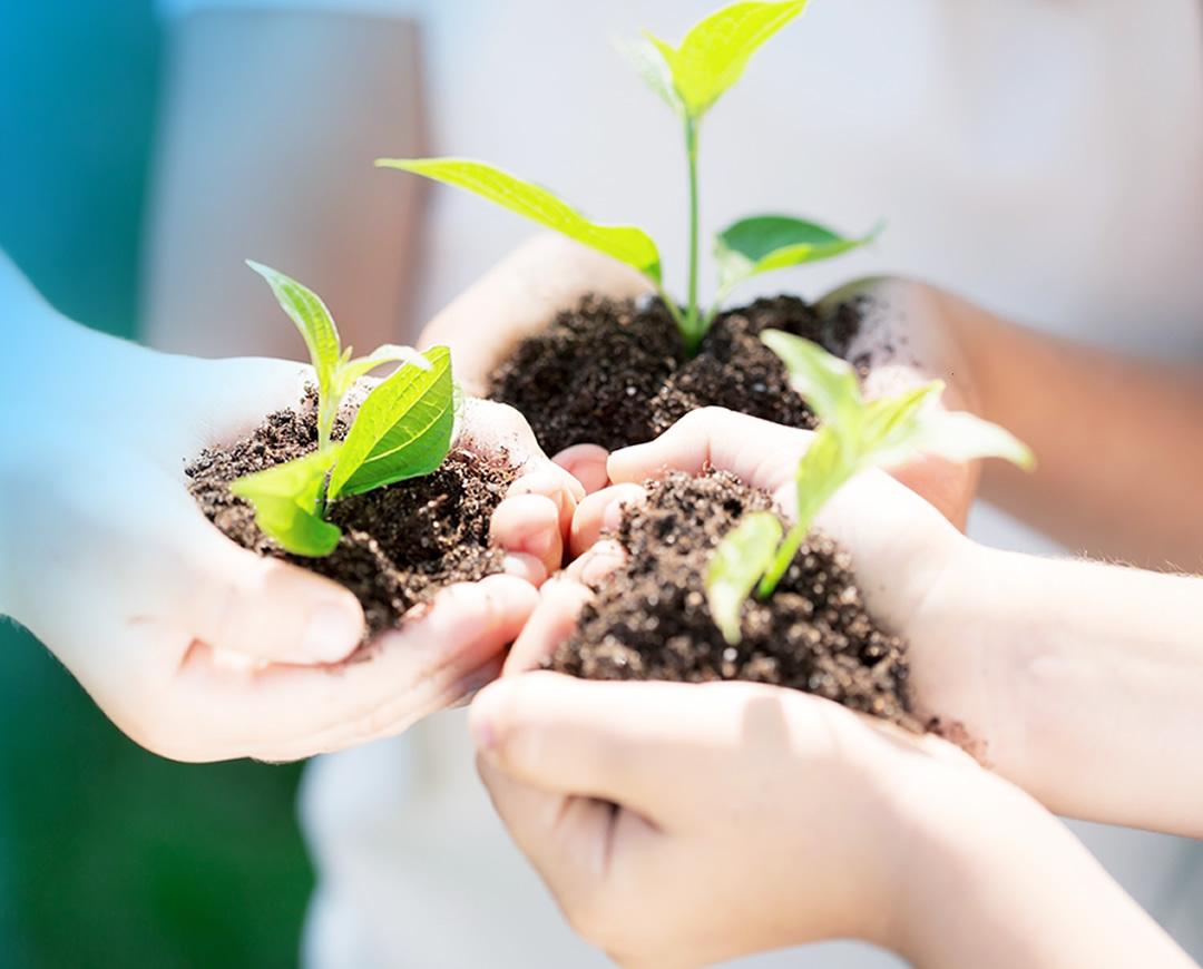 teaser-tree-planting-m